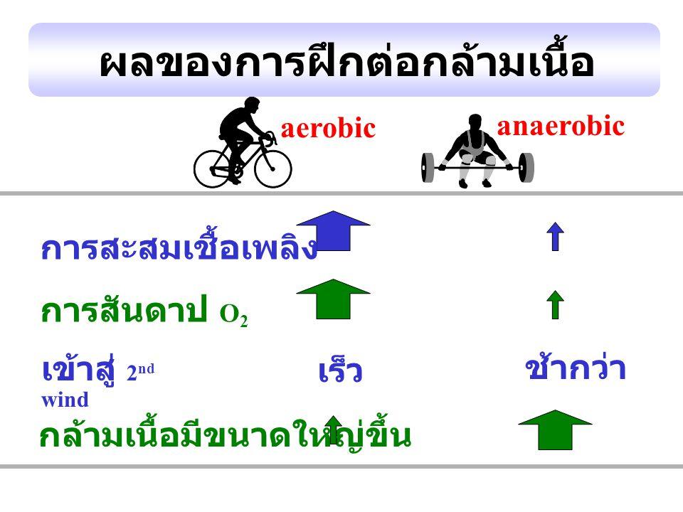 ผลของการฝึกต่อกล้ามเนื้อ