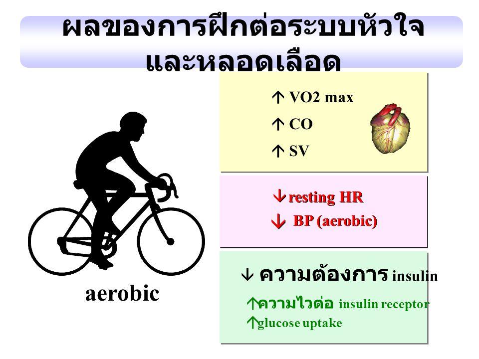 ผลของการฝึกต่อระบบหัวใจและหลอดเลือด