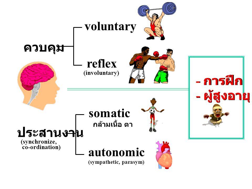 voluntary ควบคุม reflex - การฝึก - ผู้สูงอายุ somatic ประสานงาน