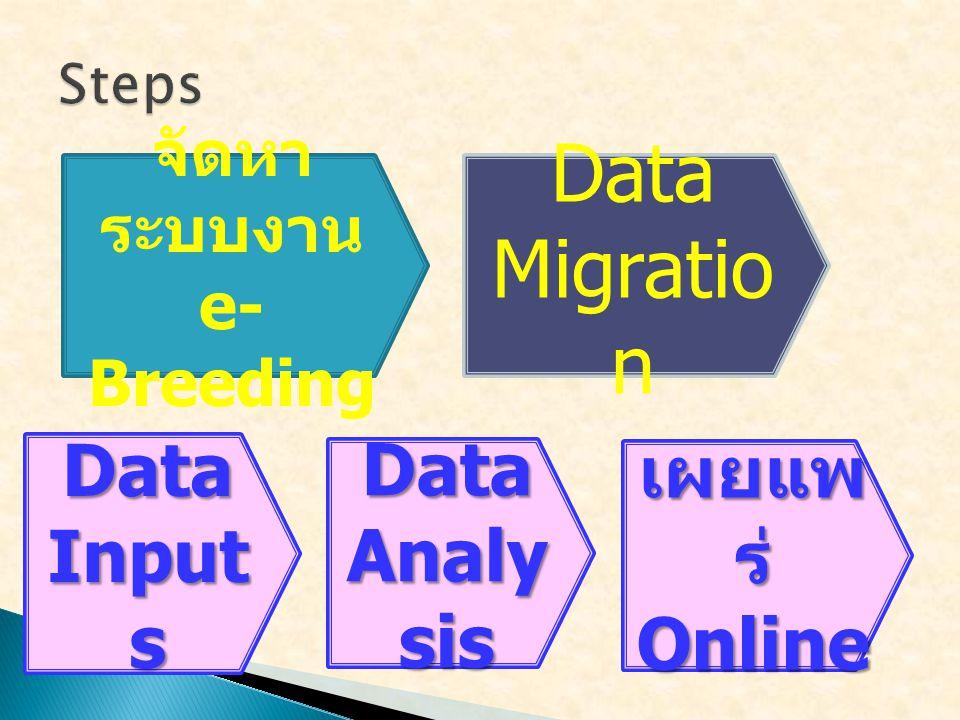 Data Migration Data Inputs Data Analysis เผยแพร่ Online จัดหาระบบงาน