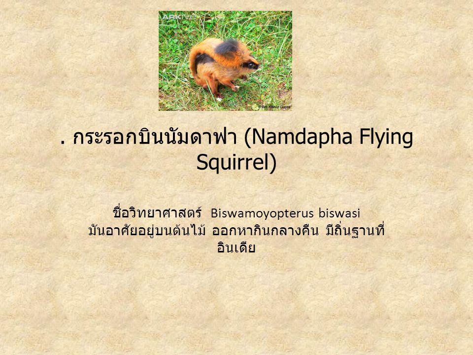 . กระรอกบินนัมดาฟา (Namdapha Flying Squirrel)