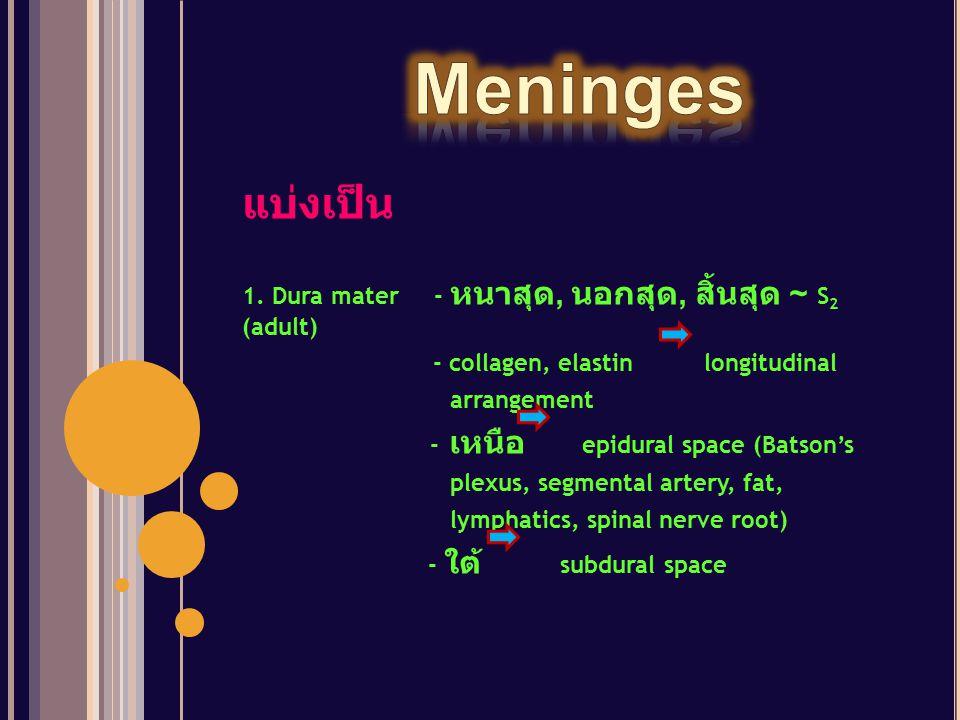 Meninges แบ่งเป็น 1. Dura mater - หนาสุด, นอกสุด, สิ้นสุด ~ S2 (adult)