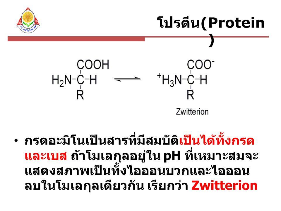 โปรตีน(Protein)