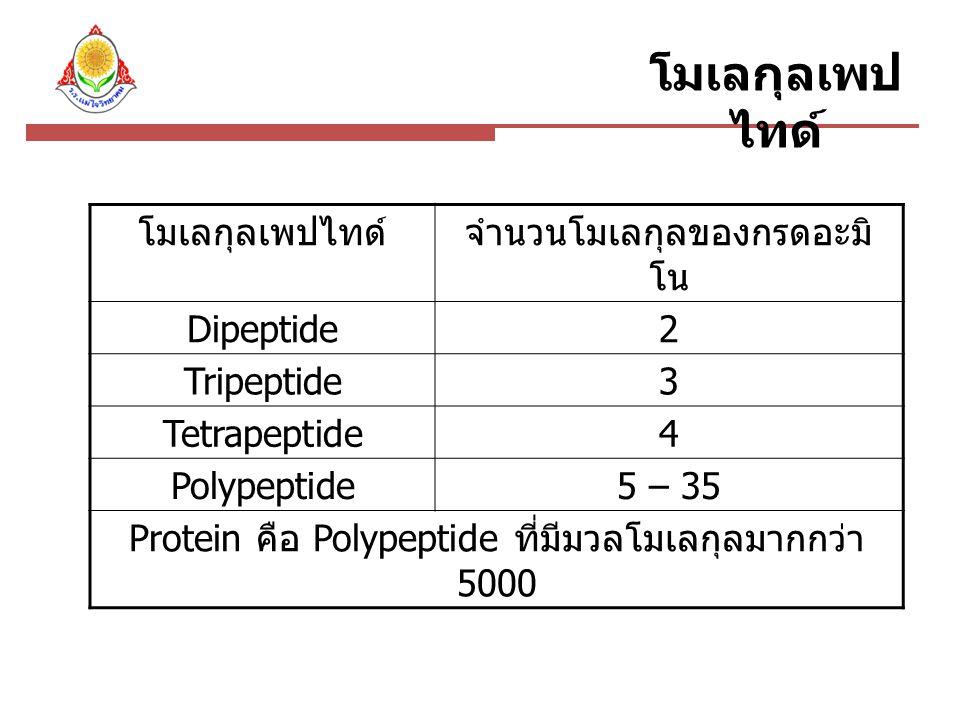 จำนวนโมเลกุลของกรดอะมิโน Dipeptide 2 Tripeptide 3 Tetrapeptide 4