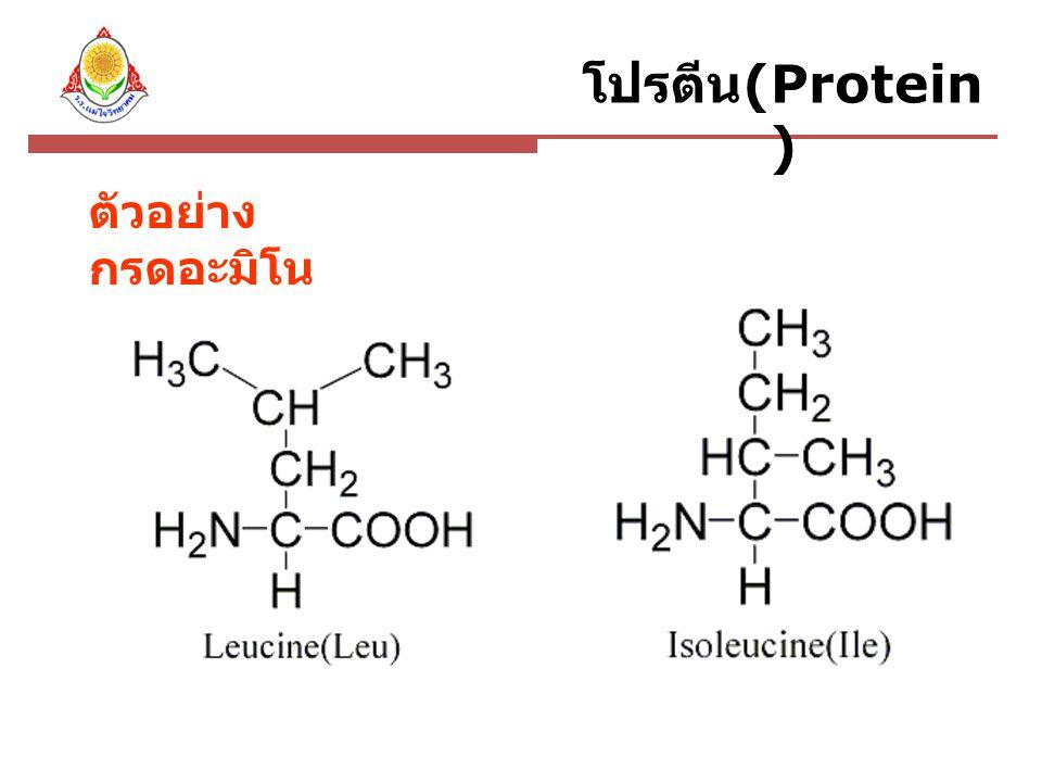 โปรตีน(Protein) ตัวอย่างกรดอะมิโน