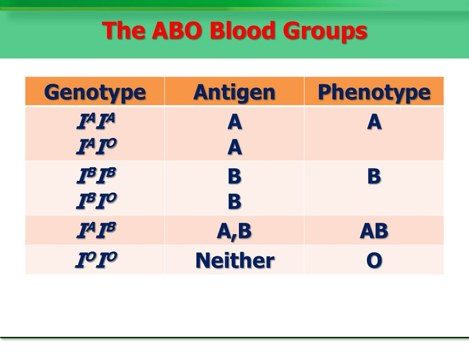 The ABO Blood Groups Genotype Antigen Phenotype IAIA IAIO A IBIB IBIO