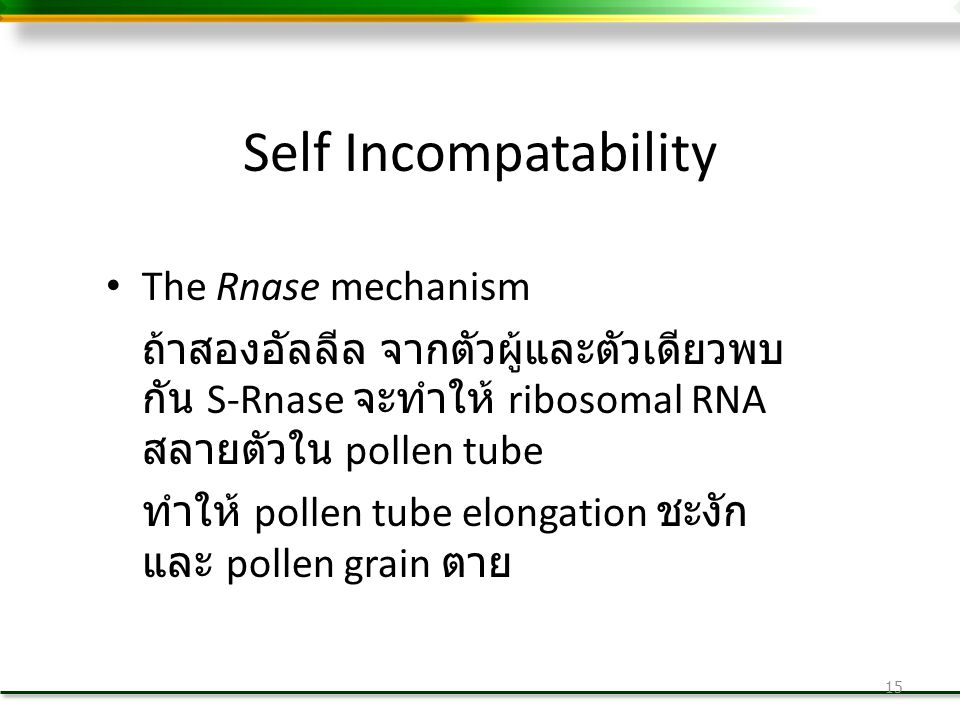 Self Incompatability The Rnase mechanism