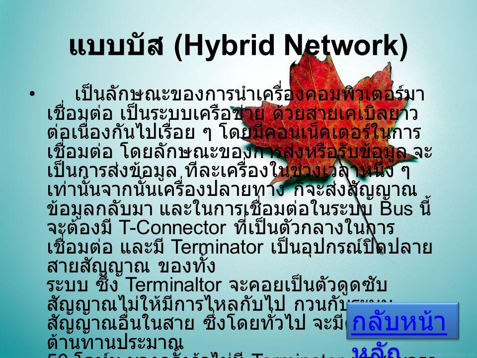 แบบบัส (Hybrid Network)
