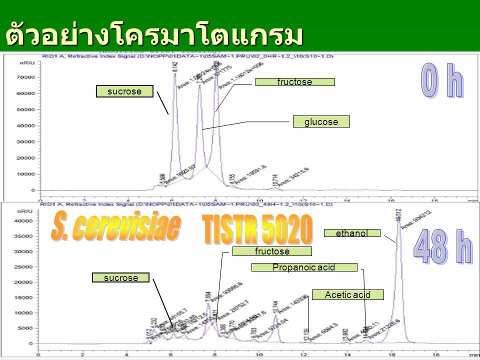 ตัวอย่างโครมาโตแกรม 0 h S. cerevisiae TISTR 5020 48 h fructose sucrose