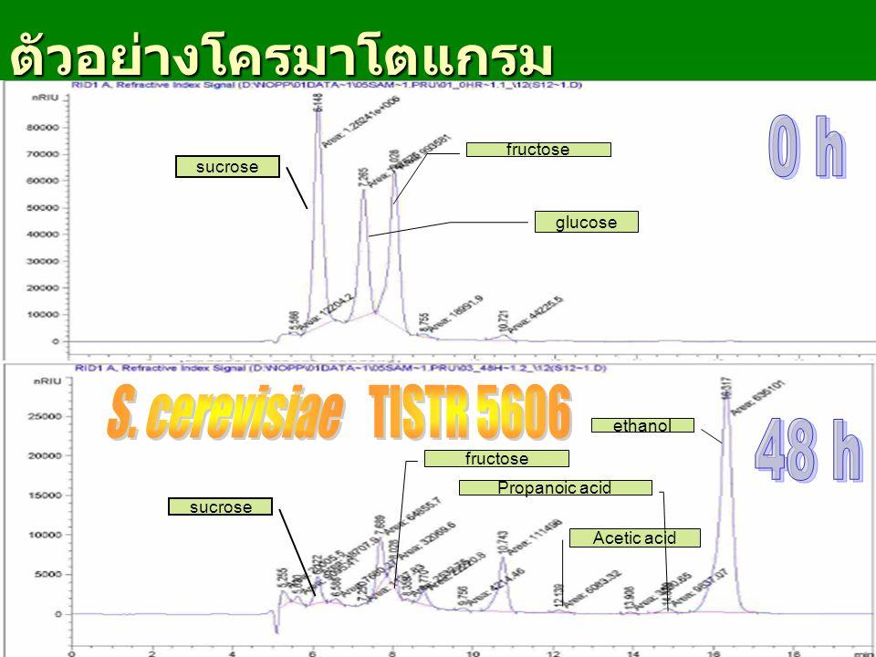 ตัวอย่างโครมาโตแกรม 0 h S. cerevisiae TISTR 5606 48 h fructose sucrose