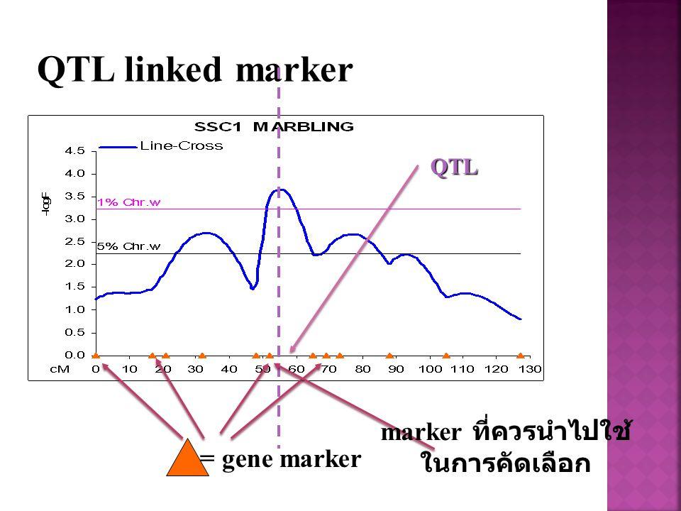 QTL linked marker QTL marker ที่ควรนำไปใช้ ในการคัดเลือก = gene marker