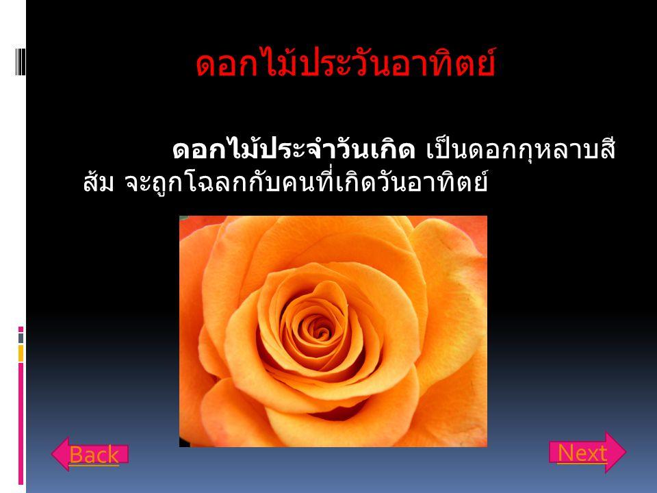 ดอกไม้ประวันอาทิตย์ ดอกไม้ประจำวันเกิด เป็นดอกกุหลาบสีส้ม จะถูกโฉลกกับคนที่ เกิดวันอาทิตย์ Next.