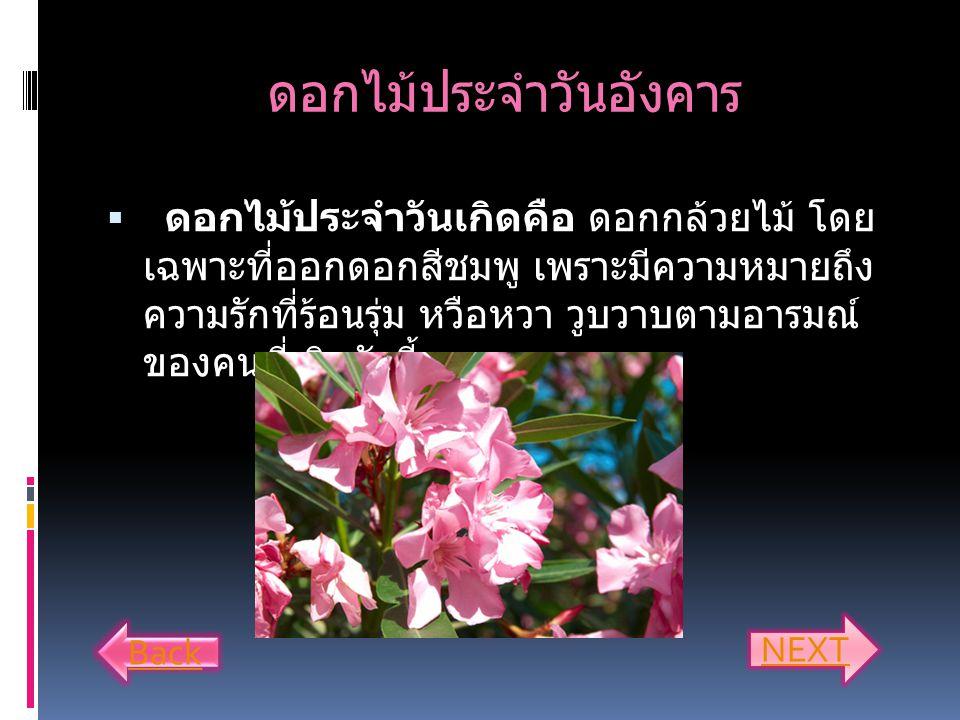 ดอกไม้ประจำวันอังคาร