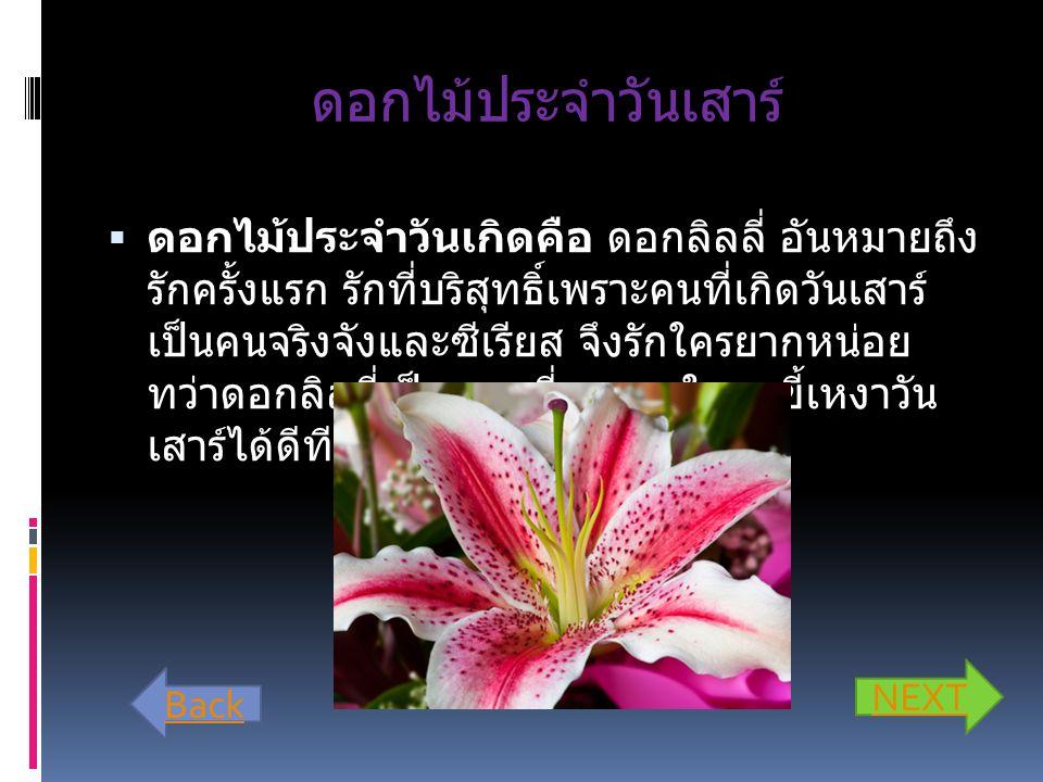 ดอกไม้ประจำวันเสาร์