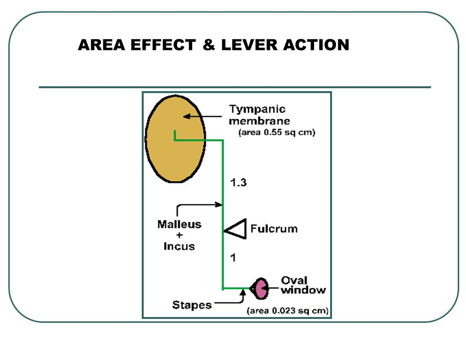 AREA EFFECT & LEVER ACTION