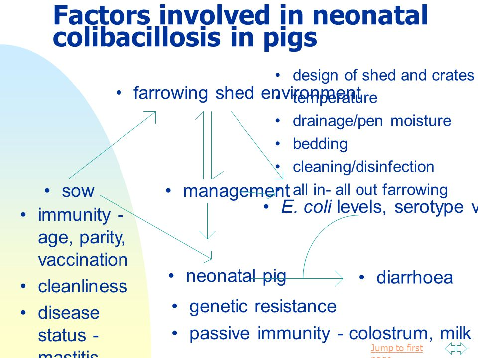 Factors involved in neonatal colibacillosis in pigs