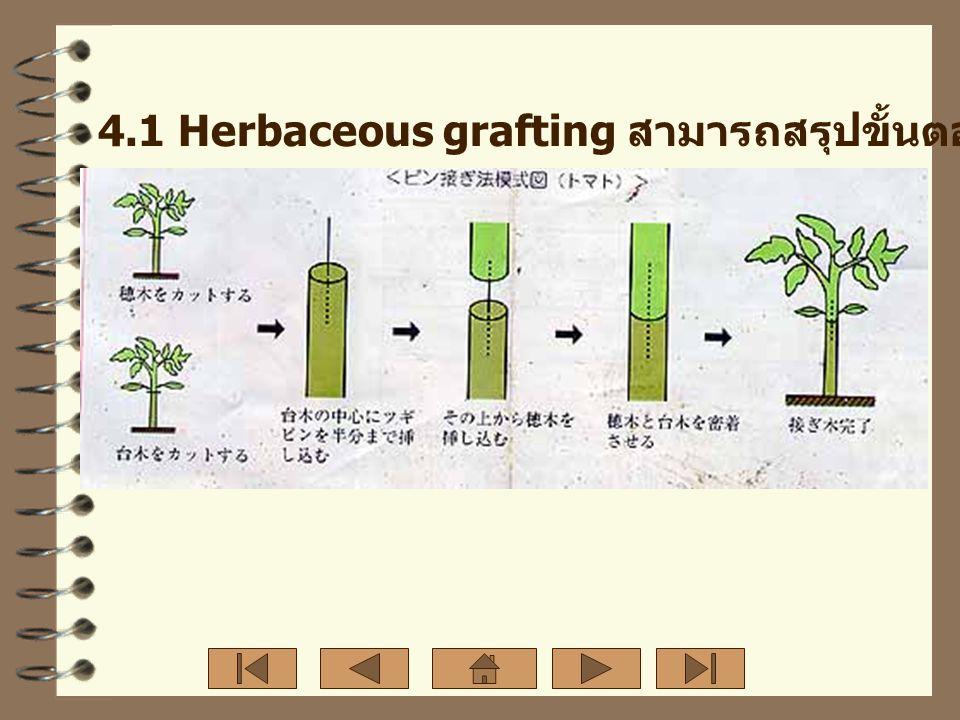 4.1 Herbaceous grafting สามารถสรุปขั้นตอนการปฏิบัติได้ดังภาพ