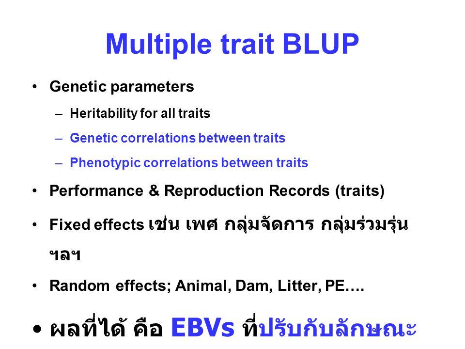 Multiple trait BLUP ผลที่ได้ คือ EBVs ที่ปรับกับลักษณะอื่นแล้ว