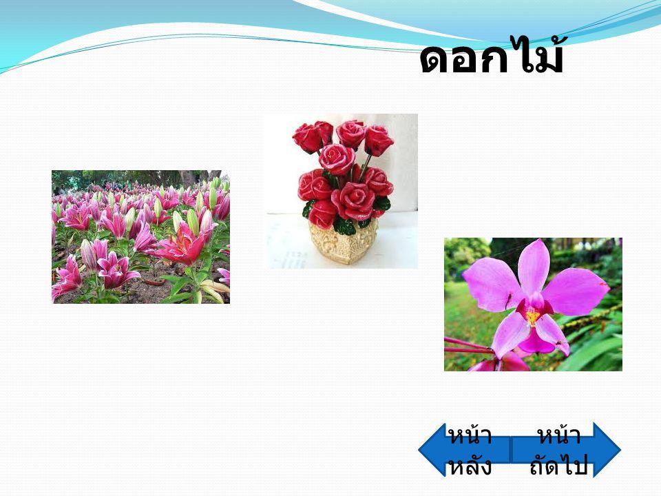ดอกไม้ หน้าหลัง หน้าถัดไป