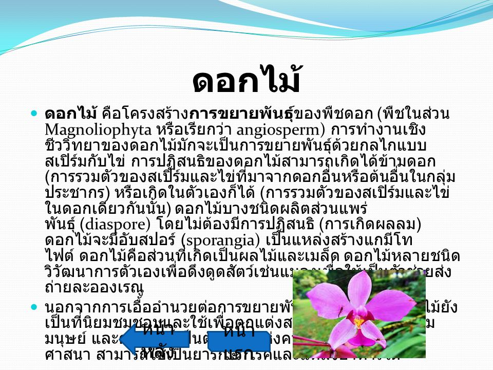 ดอกไม้ หน้าหลัง หน้าแรก