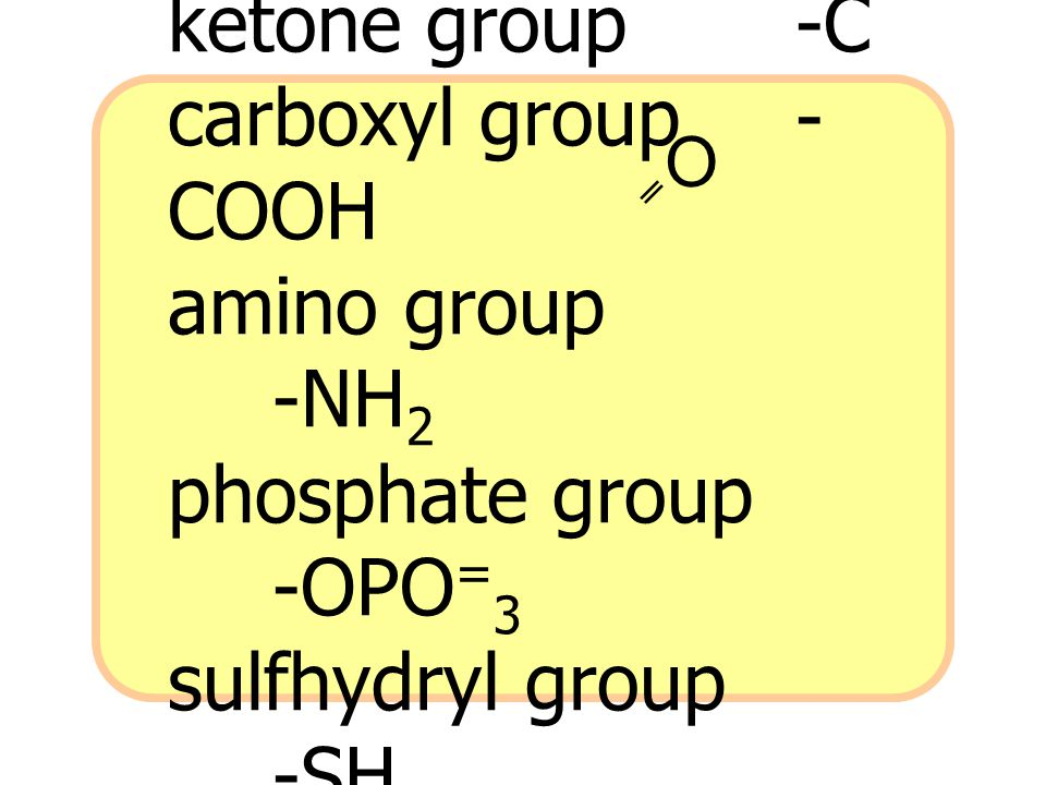 O ketone group -C carboxyl group -COOH amino group -NH2 phosphate group -OPO=3 sulfhydryl group -SH.