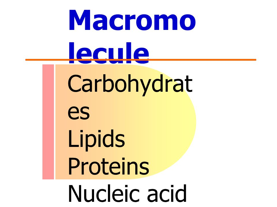 Macromolecule Carbohydrates Lipids Proteins Nucleic acid