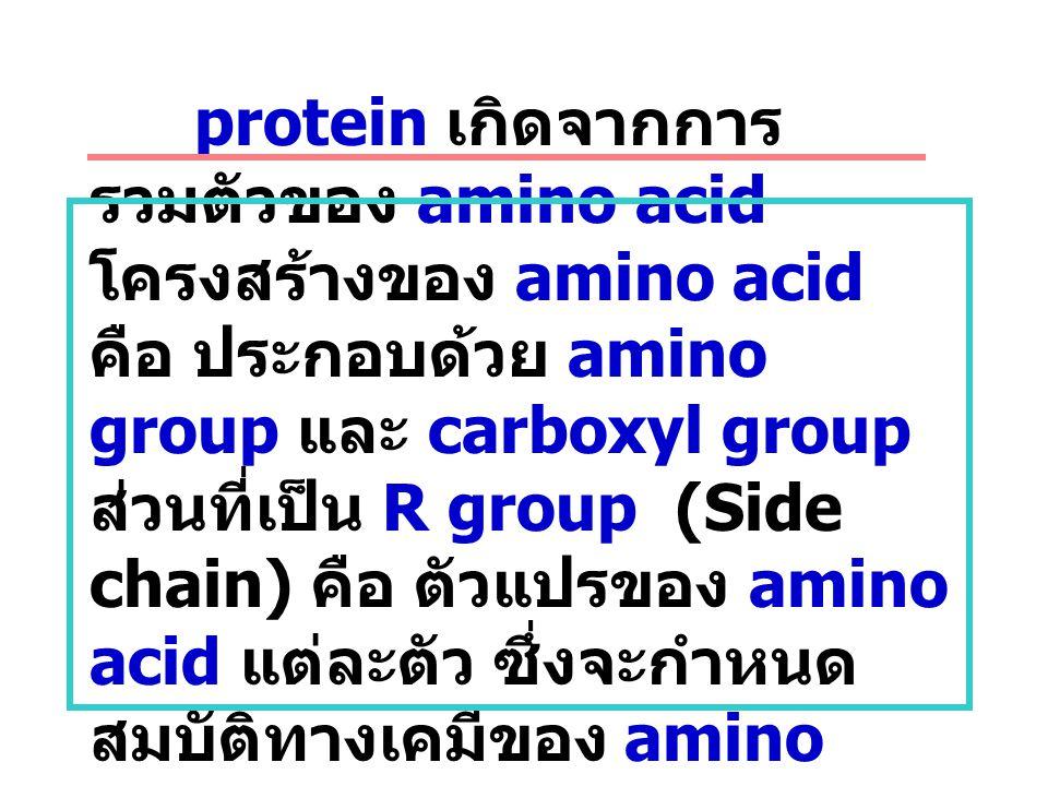 Protein structure protein เกิดจากการรวมตัวของ amino acid โครงสร้างของ amino acid คือ ประกอบด้วย amino group และ carboxyl group ส่วนที่เป็น R group (Side chain) คือ ตัวแปรของ amino acid แต่ละตัว ซึ่งจะกำหนดสมบัติทางเคมีของ amino acid