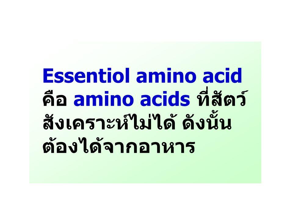 Essentiol amino acid คือ amino acids ที่สัตว์สังเคราะห์ไม่ได้ ดังนั้นต้องได้จากอาหาร