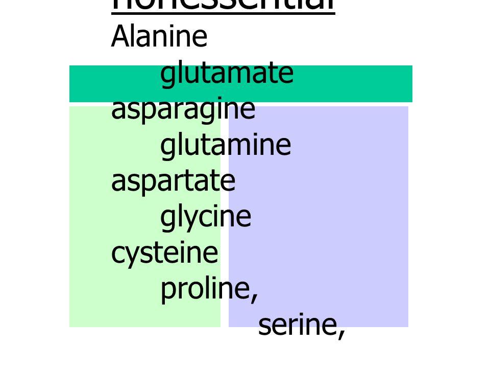 nonessential Alanine. glutamate asparagine. glutamine aspartate