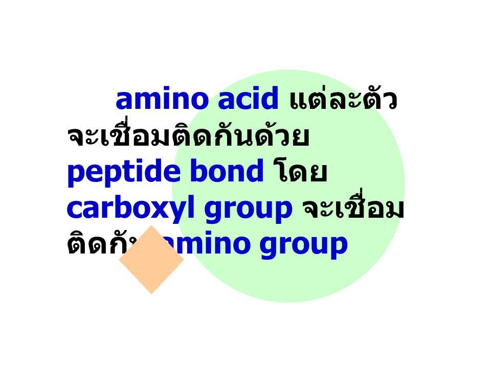 amino acid แต่ละตัวจะเชื่อมติดกันด้วย peptide bond โดย carboxyl group จะเชื่อมติดกับ amino group
