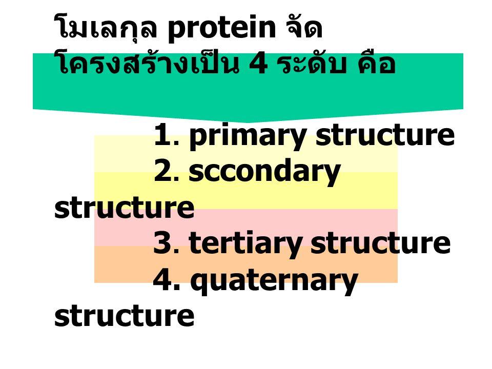 โมเลกุล protein จัดโครงสร้างเป็น 4 ระดับ คือ. 1. primary structure. 2
