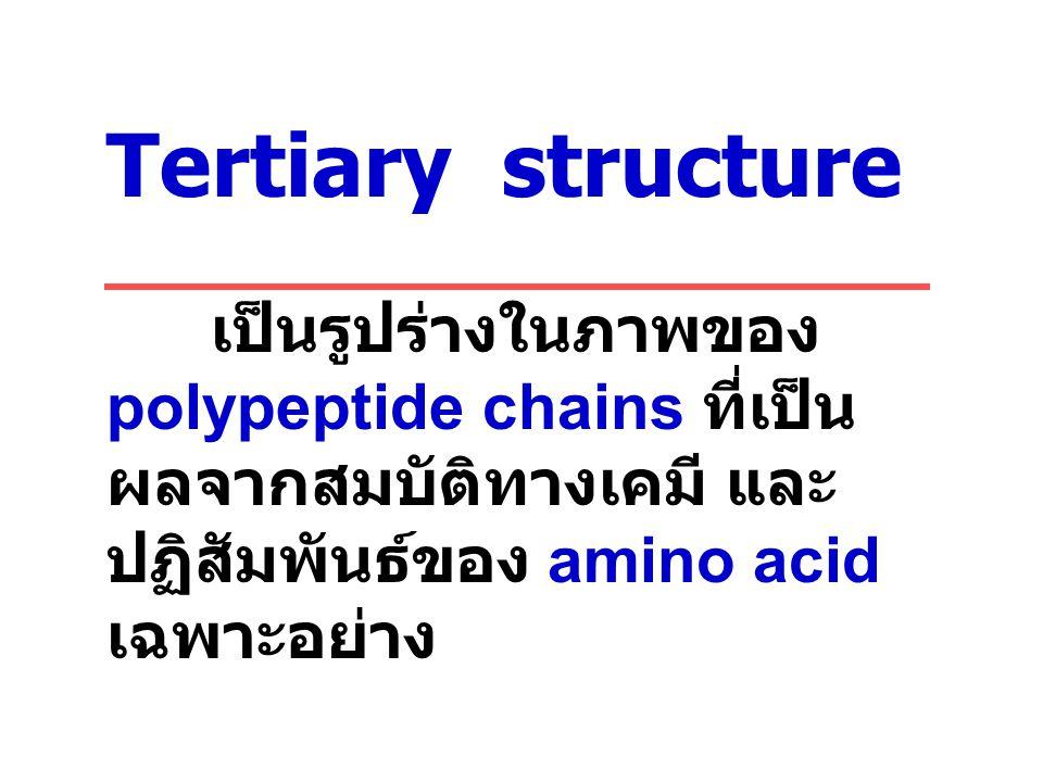 Tertiary structure เป็นรูปร่างในภาพของ polypeptide chains ที่เป็นผลจากสมบัติทางเคมี และปฏิสัมพันธ์ของ amino acid เฉพาะอย่าง