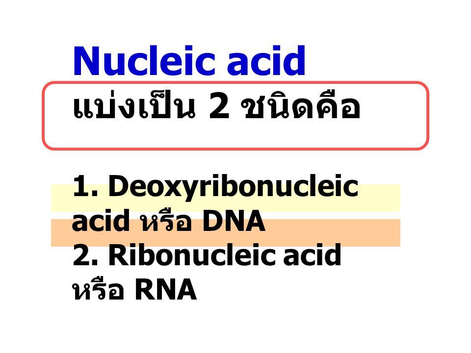 Nucleic acid แบ่งเป็น 2 ชนิดคือ 1. Deoxyribonucleic acid หรือ DNA 2
