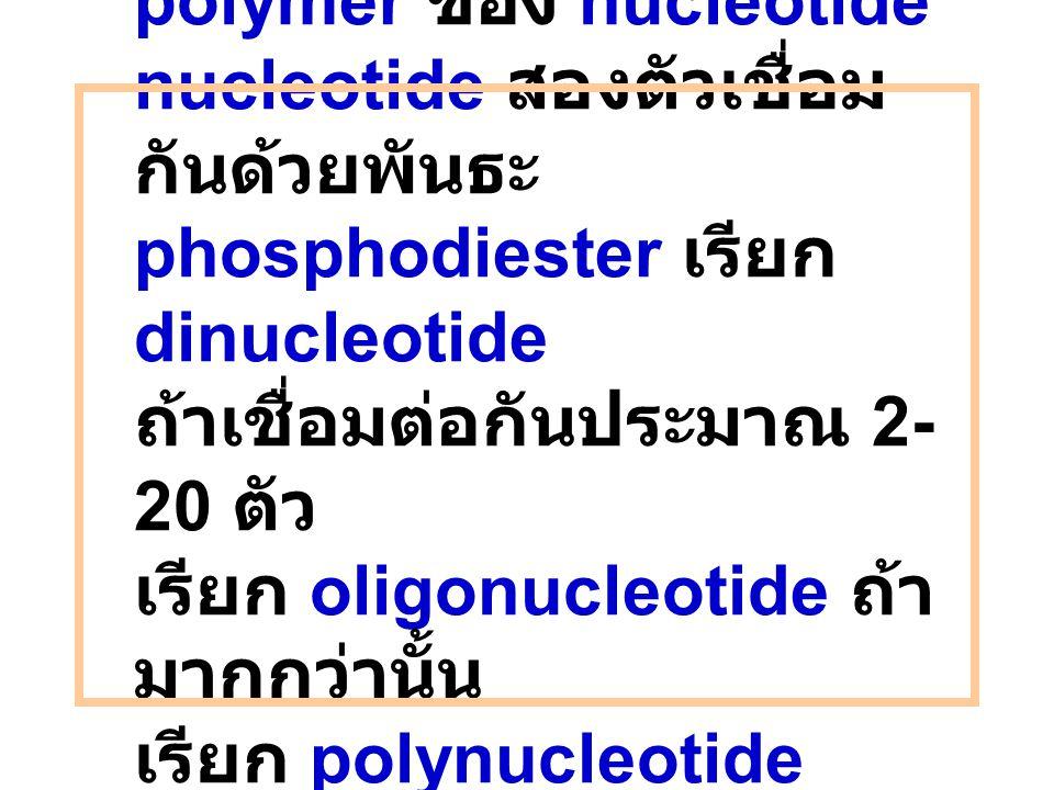 Nucleic acid เป็น polymer ของ nucleotide nucleotide สองตัวเชื่อมกันด้วยพันธะ phosphodiester เรียก dinucleotide ถ้าเชื่อมต่อกันประมาณ 2-20 ตัว เรียก oligonucleotide ถ้ามากกว่านั้น เรียก polynucleotide หรือ nucleic acid