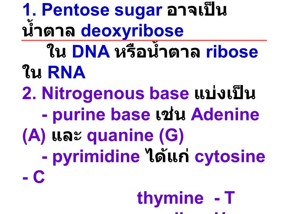 Nucleotide ประกอบด้วย 1