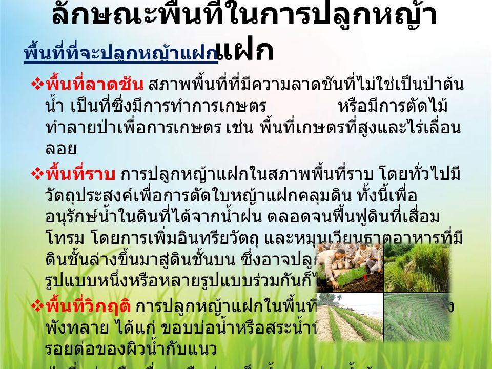 ลักษณะพื้นที่ในการปลูกหญ้าแฝก