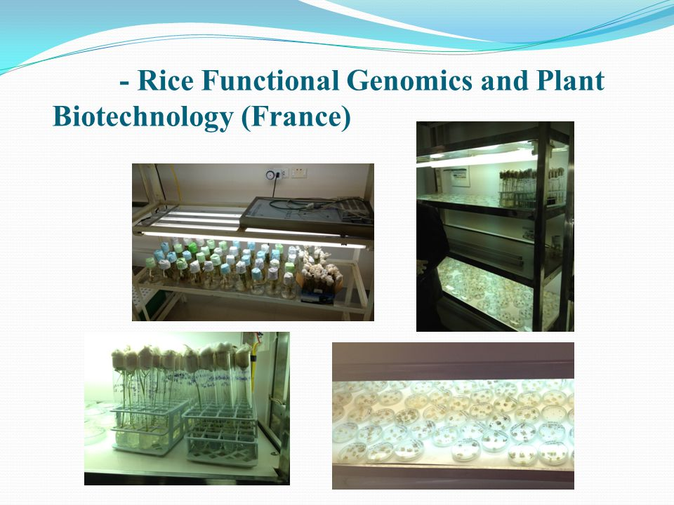 - Rice Functional Genomics and Plant Biotechnology (France)