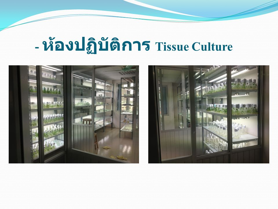 - ห้องปฏิบัติการ Tissue Culture