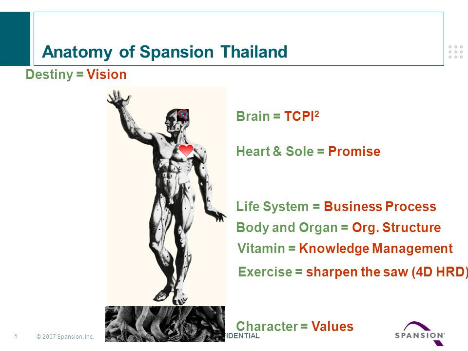Anatomy of Spansion Thailand