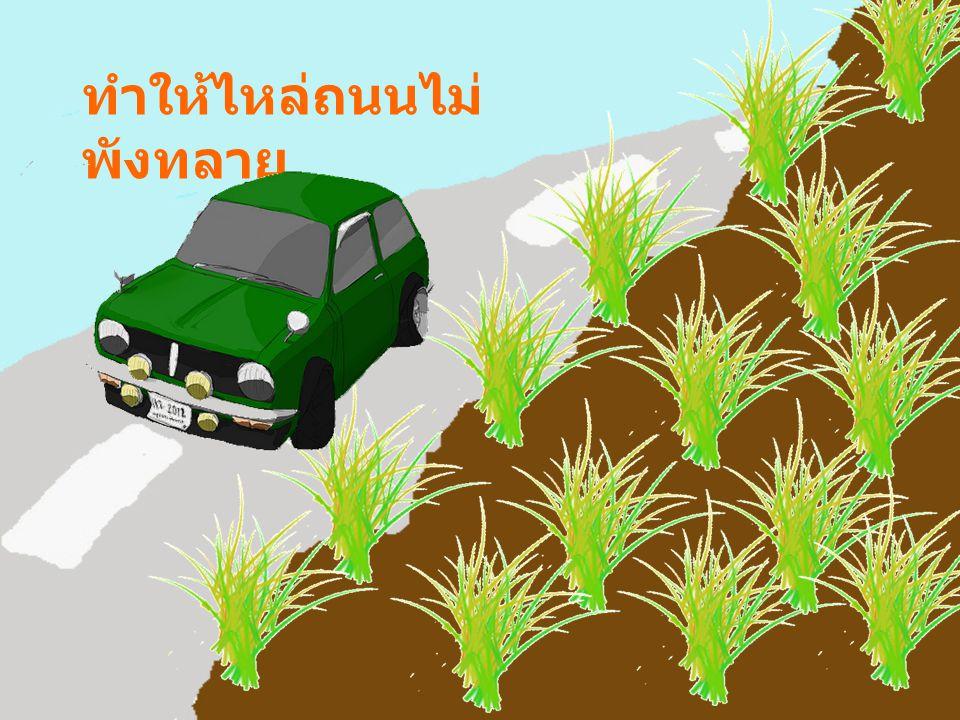 ทำให้ไหล่ถนนไม่พังทลาย