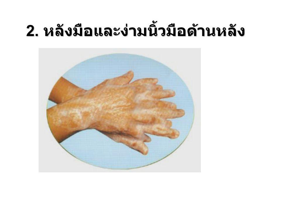 2. หลังมือและง่ามนิ้วมือด้านหลัง