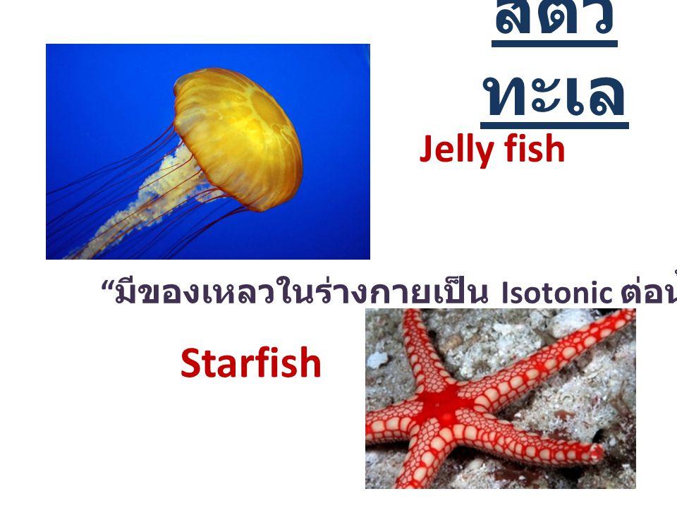 สัตว์ทะเล Starfish Jelly fish