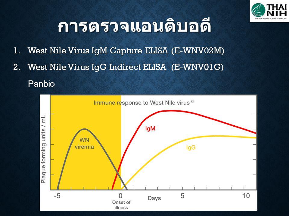 การตรวจแอนติบอดี West Nile Virus IgM Capture ELISA (E-WNV02M)