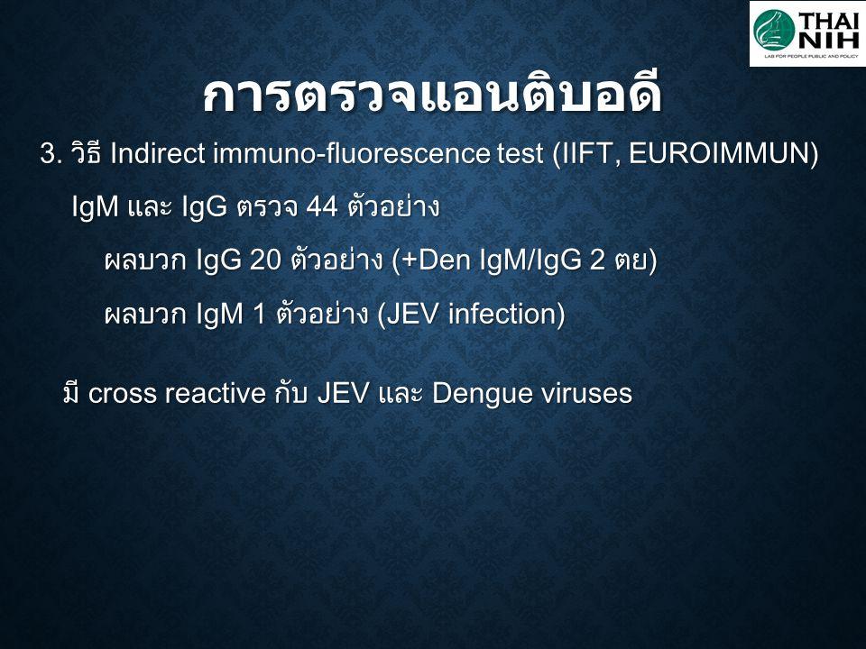 การตรวจแอนติบอดี 3. วิธี Indirect immuno-fluorescence test (IIFT, EUROIMMUN) IgM และ IgG ตรวจ 44 ตัวอย่าง.