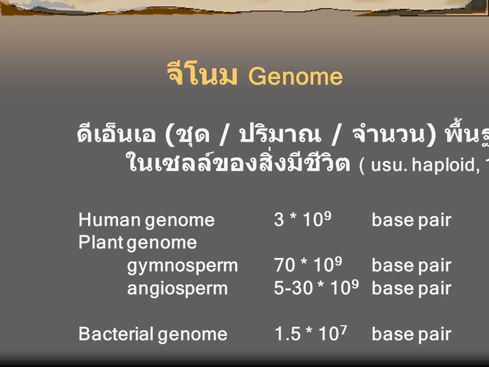 จีโนม Genome ดีเอ็นเอ (ชุด / ปริมาณ / จำนวน) พื้นฐาน