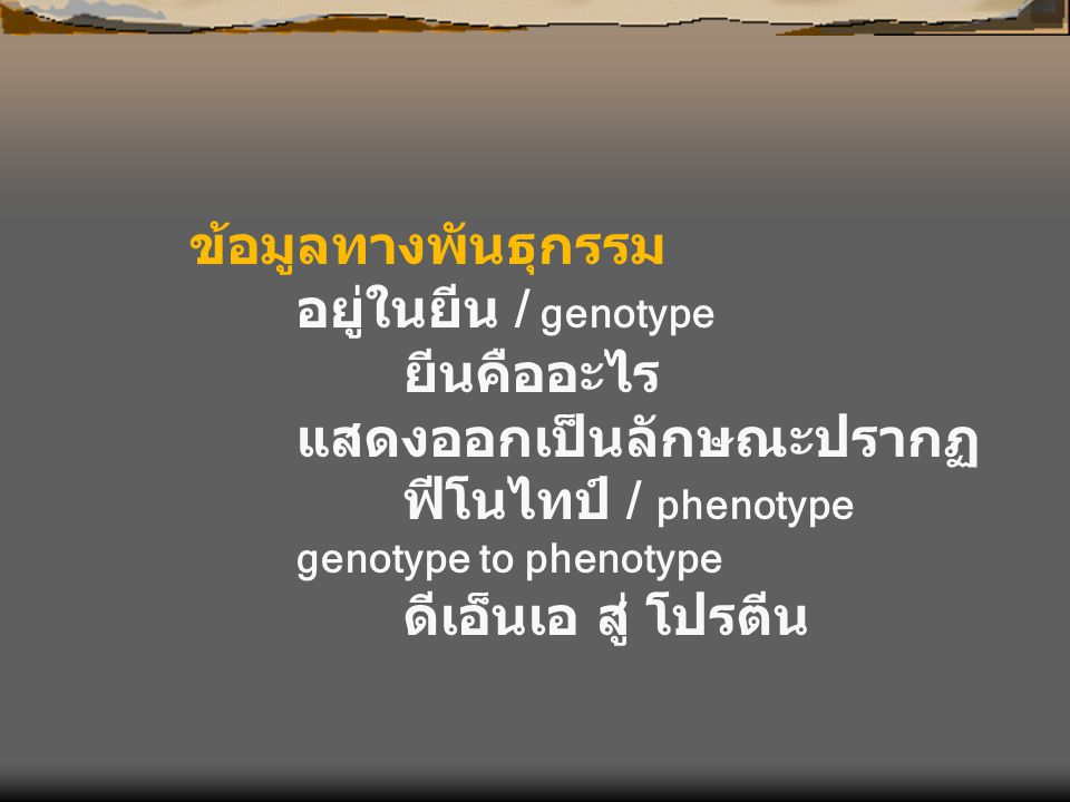 แสดงออกเป็นลักษณะปรากฏ ฟีโนไทป์ / phenotype