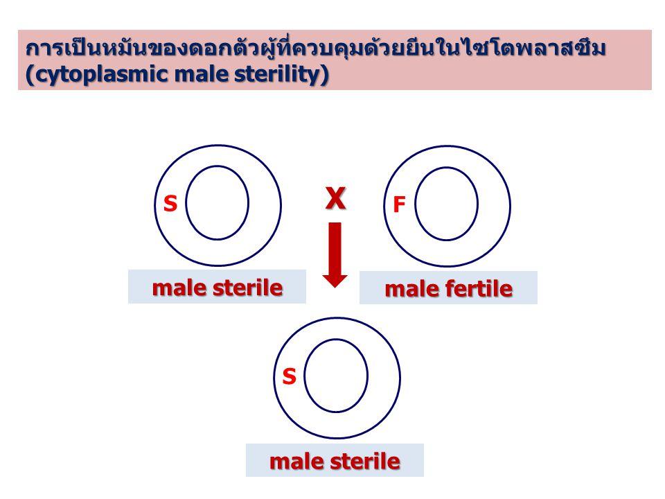 X การเป็นหมันของดอกตัวผู้ที่ควบคุมด้วยยีนในไซโตพลาสซึม