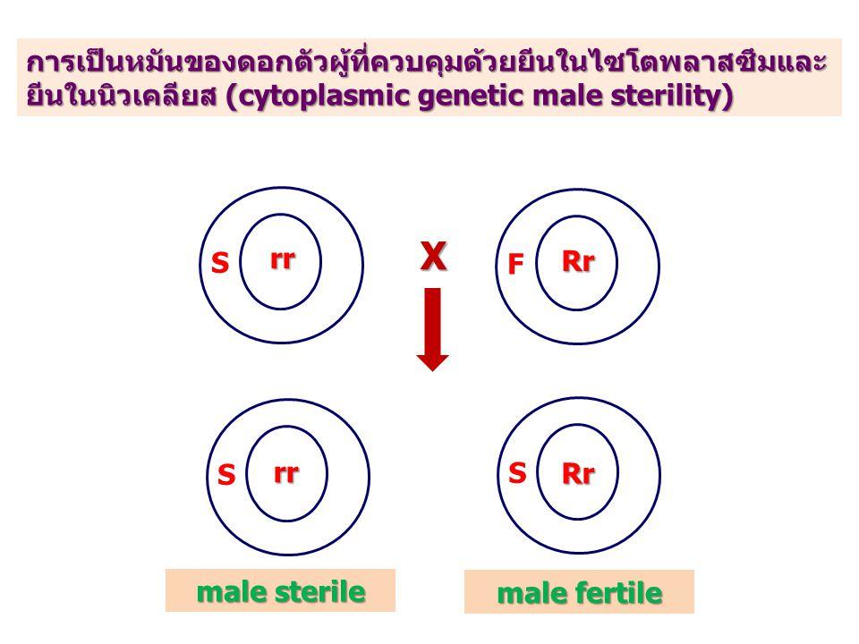 การเป็นหมันของดอกตัวผู้ที่ควบคุมด้วยยีนในไซโตพลาสซึมและยีนในนิวเคลียส (cytoplasmic genetic male sterility)