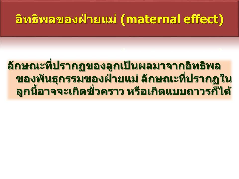 อิทธิพลของฝ่ายแม่ (maternal effect)