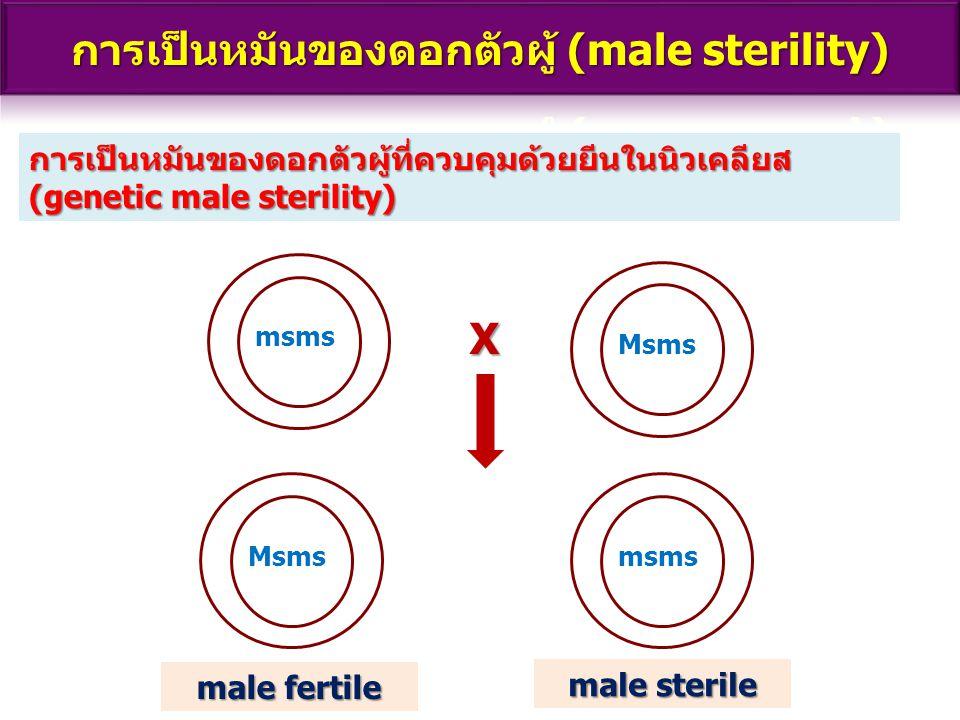 การเป็นหมันของดอกตัวผู้ (male sterility)